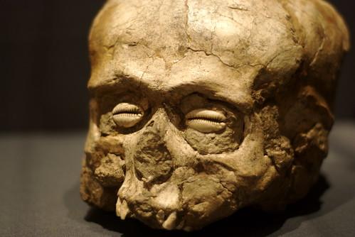 Shells and Skull