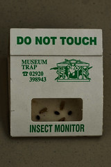 Zoom In - Museum Trap (insect monitor)
