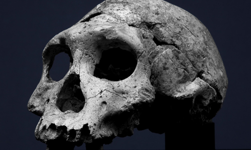 Dmanisi Skull - Oldest european hominin