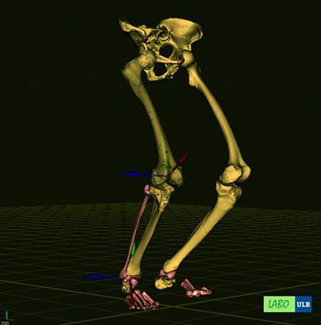 LABO Neanderthal Walk