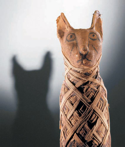 cat mummy that will be on display at mummies of the world