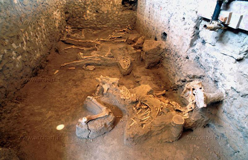 The equine skeletons found at the 'House of the Chaste Lovers', Pompeii. - Image copyright Giovanni Lattanzi, archart.it